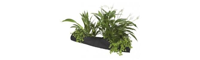 Plant manden